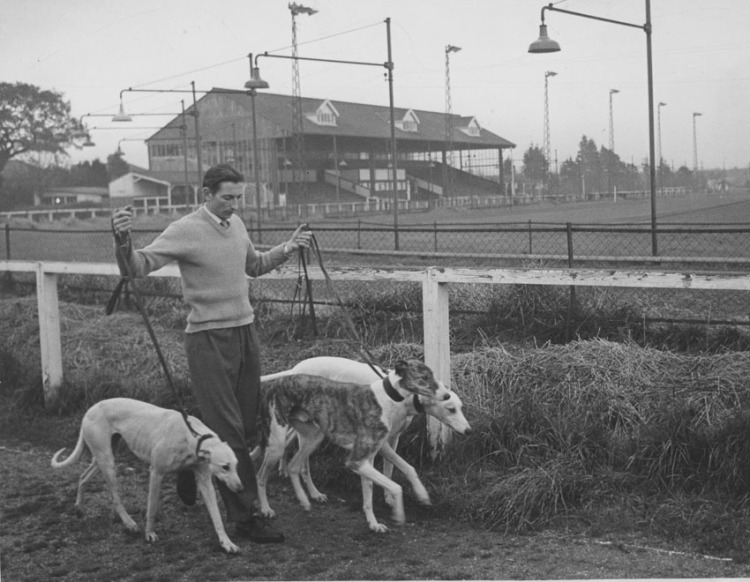 Boundary_man_with_greyhounds1small